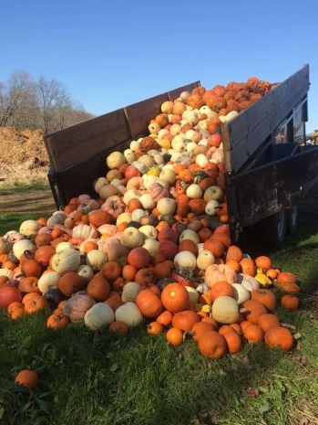 Plumpkin Zoo Donation