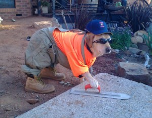 dog-construction